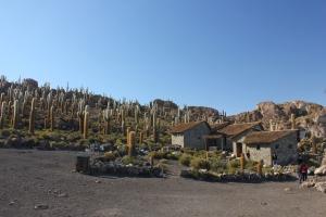 Isla Incahuasi, en la mitad del salar de uyuni